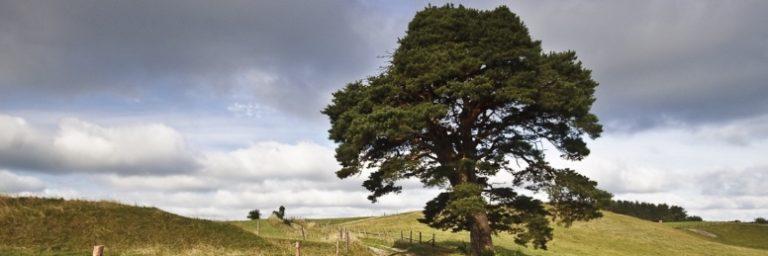 Krajobraz z drzewem